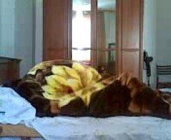 Таджик раком оприходовал темноволосую шалаву