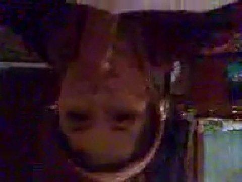 Молодая узбекская давалка стесняется сосать на камеру