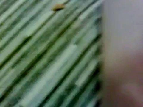 Девушка в трусиках возбудила соседа и отсосала ему за лизание письки
